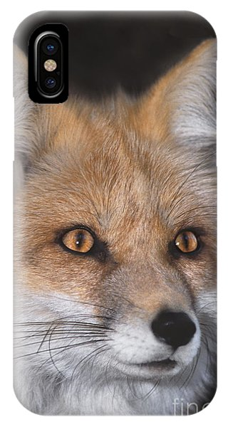 IPhone Case featuring the photograph Red Fox Portrait Wildlife Rescue by Dave Welling