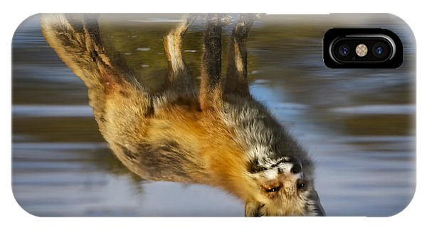 Red Fox Reflection IPhone Case
