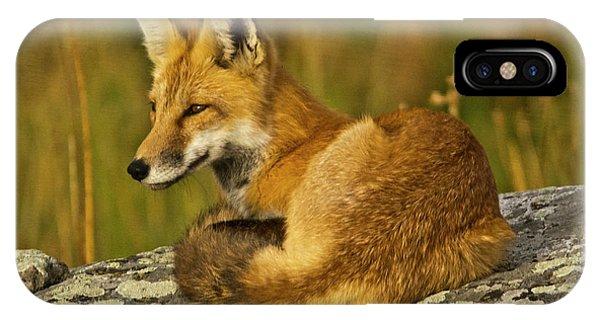 Cunning iPhone X Case - Red Fox, Resting, Rock, Lamar Valley by Michel Hersen