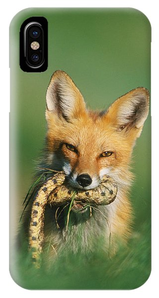 Red Fox With Snake IPhone Case