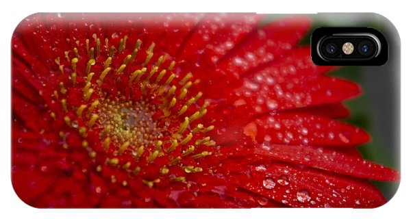 Red Gerber In The Rain IPhone Case