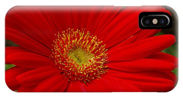 Red Gerbera Daisy IPhone Case