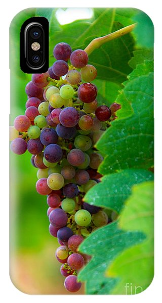Red Grapes IPhone Case
