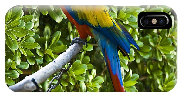Red-green Macaw IPhone Case