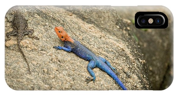 Red-headed Rock Agama Phone Case by Photostock-israel