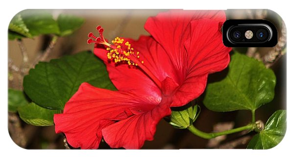 Red Hibiscus Flower IPhone Case