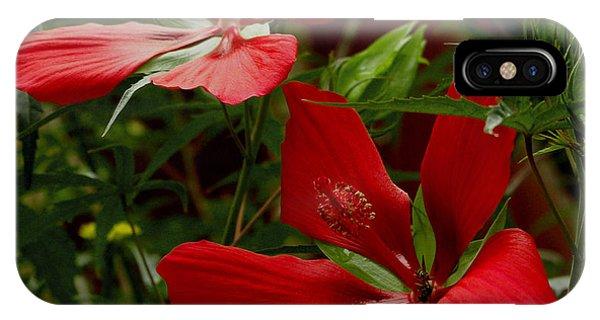 Red Hibiscus Blooms IPhone Case