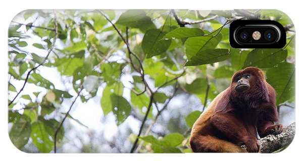 Red Howler Monkey Sitting In A Tree IPhone Case