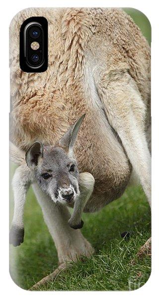 Red Kangaroo Joey IPhone Case