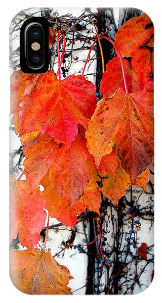 Red Leaves Of Fall IPhone Case