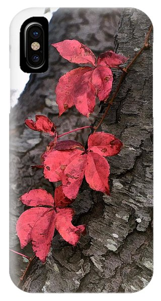 Red Leaves On Bark IPhone Case