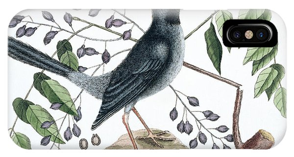 North London iPhone Case - Red-legged Thrush by Natural History Museum, London
