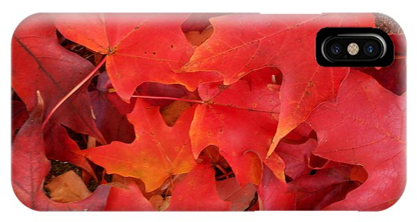 Red Maple Leaves Carpeting The Ground IPhone Case