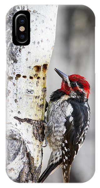 Red-naped Sapsucker IPhone Case