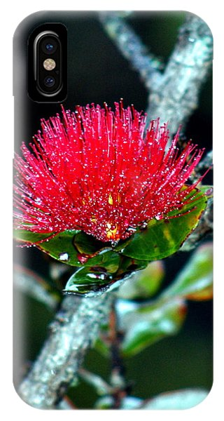 Red Ohia Lehua In Hawaii Volcano Mist IPhone Case