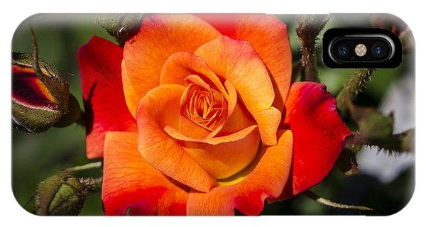 Red-orange Rose IPhone Case