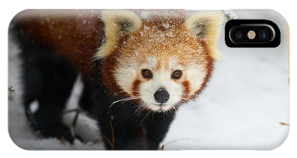 Red Panda In The Snow IPhone Case