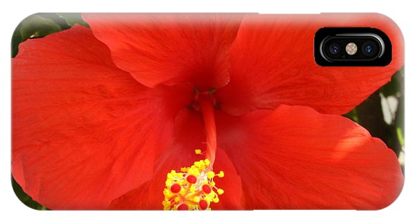 Red Pansy IPhone Case