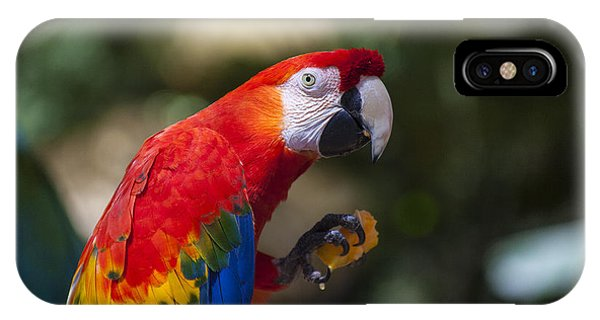 Macaw iPhone Case - Red Parrot  by Garry Gay