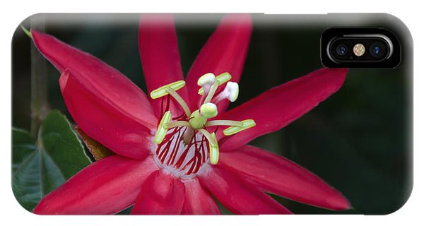 Red Passion Flower IPhone Case