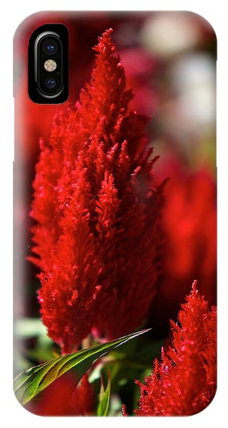 Red Plant IPhone Case