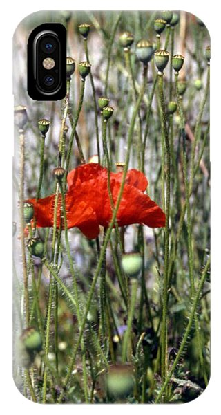 Red Poppy And Buds IPhone Case