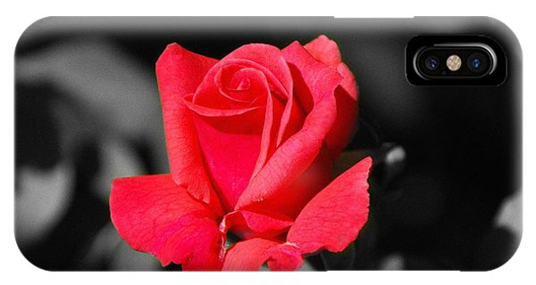 Red Red Rose - Sc IPhone Case