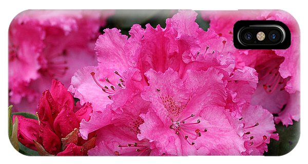 Red Rhododendrons IPhone Case