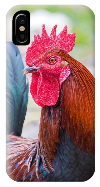 Red Rooster IPhone Case