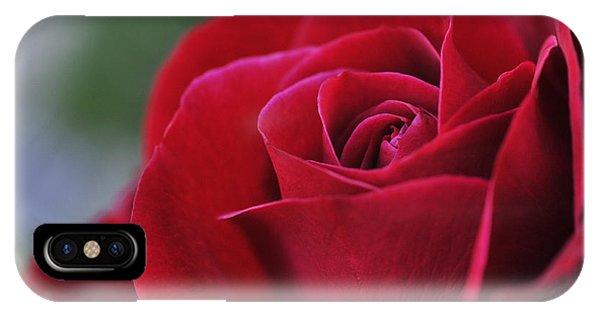 Red Rose Close 1 IPhone Case