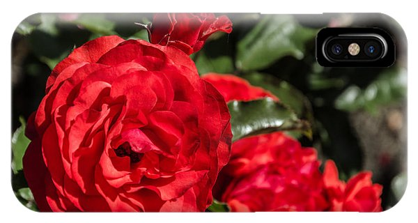 Rosebush iPhone Case - Red Rose by Jess Kraft