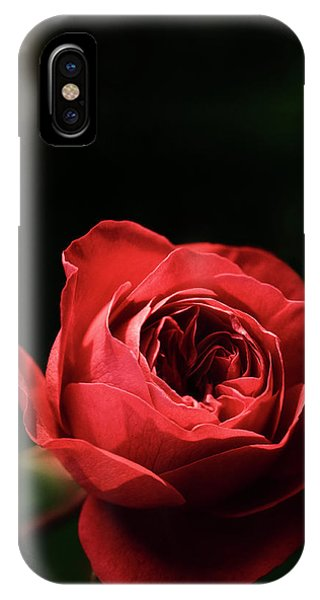 Hybrid iPhone Case - Red Rose (rosa Hybrid) by Maria Mosolova/science Photo Library