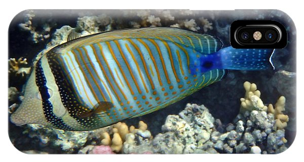 Red Sea Beauty Zebrasoma IPhone Case