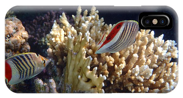 Red Sea Beauty 2 IPhone Case