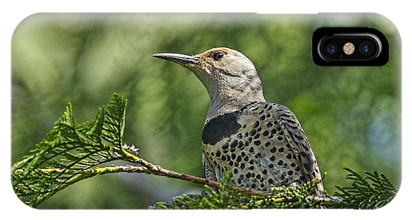 Northern Flicker iPhone Case - Red Shafted Northern Flicker Female by Sharon Talson