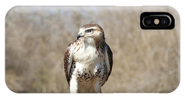 Red Shoulder Hawk IPhone Case