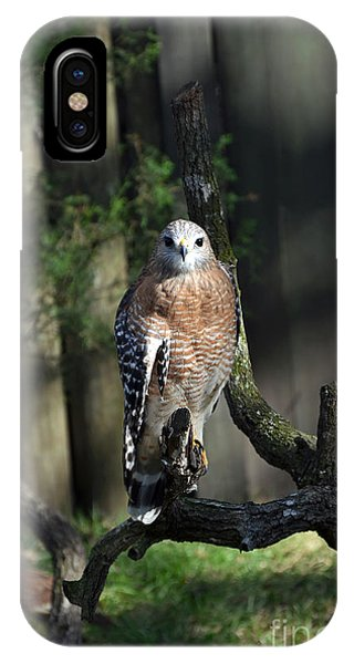 Red Shouldered-hawk IPhone Case