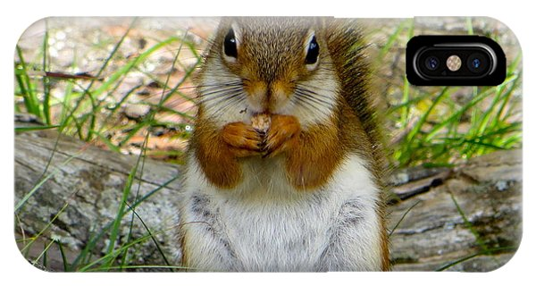 Red Squirrel Eating Peanut Butter And Jelly IPhone Case