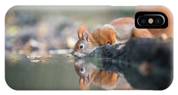 Red Squirrel Phone Case by Erik Willaert