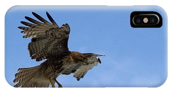 Red Tail Hawk iPhone Case - Red Tail Hawk by Bill Gallagher