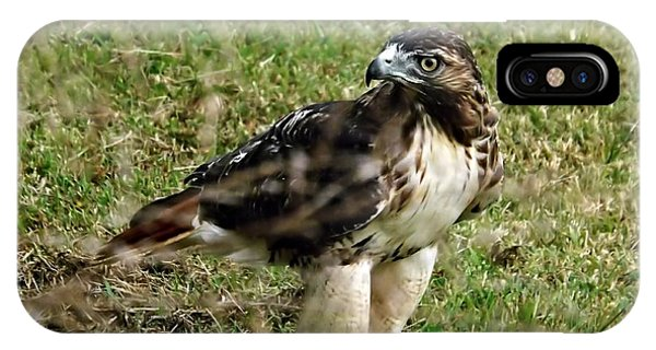 Red Tail Hawk Phone Case by Christy Ricafrente