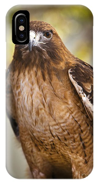 Eyes Of The Raptor IPhone Case