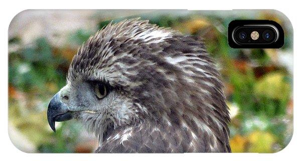 Red Tail Hawk Head Shot IPhone Case