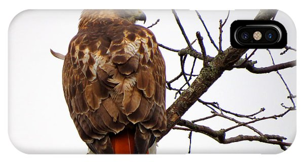 Red Tail Hawk In Winter IPhone Case