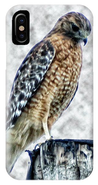 Red Tail Hawk Looking Down IPhone Case