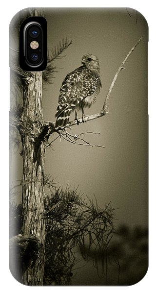 Red Tail Hawk On Loop Road IPhone Case