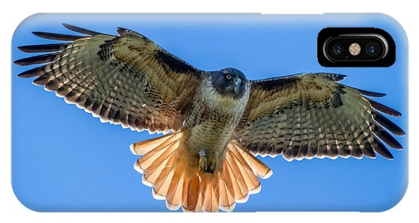 Red Tail Hawk iPhone Case - Red Tail Hawk by Pierre Leclerc Photography