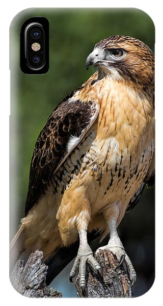 Red Tail Hawk Portrait IPhone Case