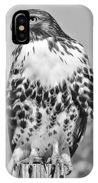 Red Tail Hawk iPhone Case - Red Tail Hawk Youth Black And White by Jennie Marie Schell