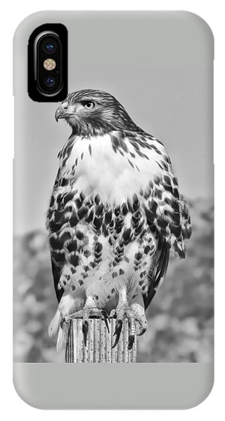 Red Tail Hawk Youth Black And White IPhone Case